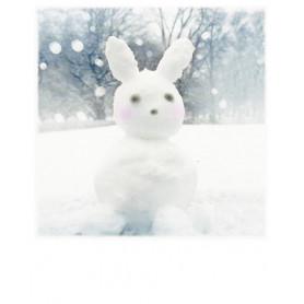 Polarcard - Snow Bunny