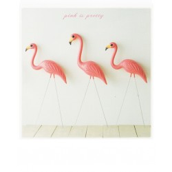 Polacard - Flamingos