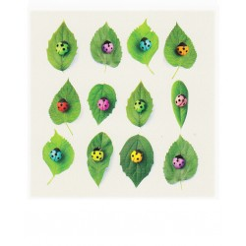 Polacard - Ladybugs