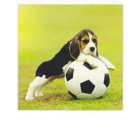 Polacard - Doggie ball