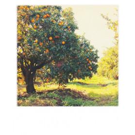 Polarcard - Orangetree