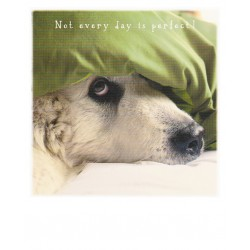 Polarcard - Not a perfect day