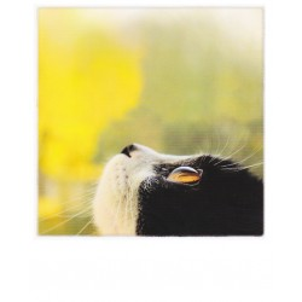 Polarcard - Cat