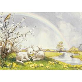 Molly Brett - Lambs