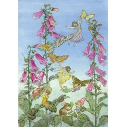 Molly Brett - Fairies and Foxgloves