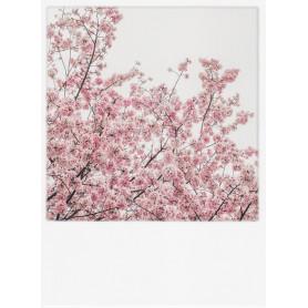 Polacard - Japanse sierkers