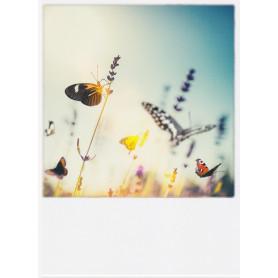 Polacard - Vlinders