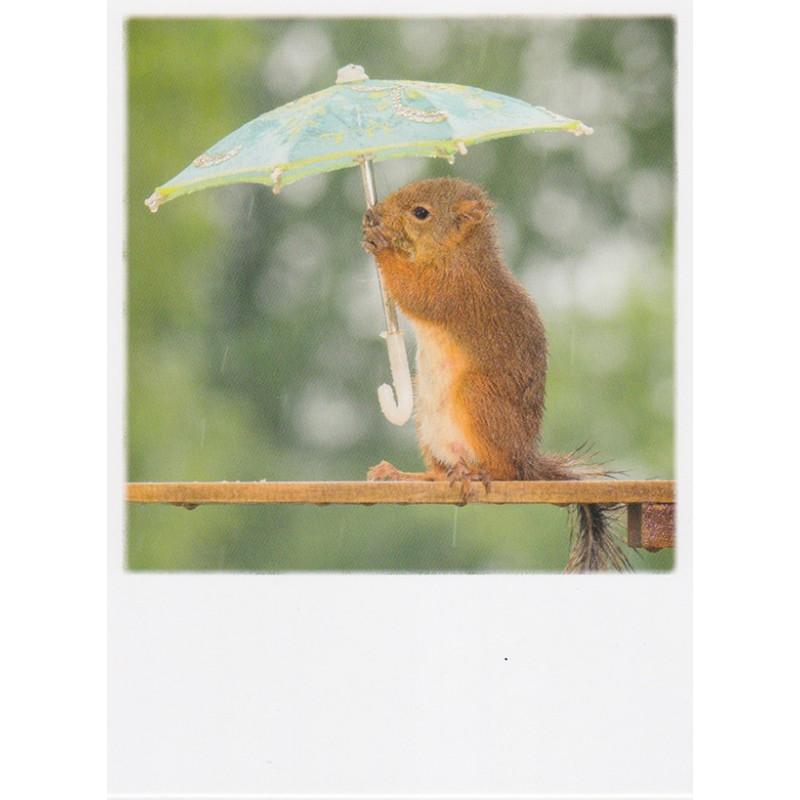 Polacard - Eekhoorn in de regen