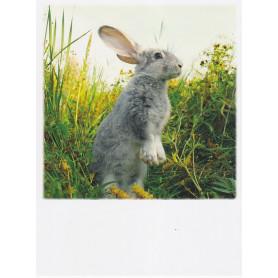 Polacard - Grey bunny