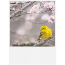 Polacard - Yellow bird